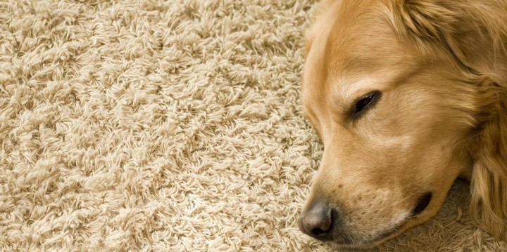 How to Clean Pet Stains In Your Carpet